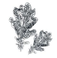Tim Holtz Sizzix 3D Impresslits Embossing Folder - Oak Leaf