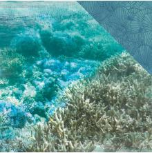 Kaisercraft Deep Sea Double-Sided Cardstock 12X12 - Barrier Reef